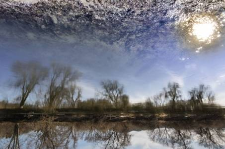 """Reflection of the early morning sun over a row of trees. At the top of the image it becomes apparent that some of the """"clouds"""" in the sky are actually mud under the water. (Color balance adjusted to smooth the transition between sky and mud)"""